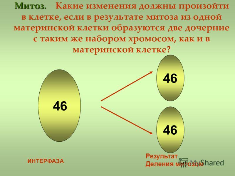 Митоз. Митоз. Какие изменения должны произойти в клетке, если в результате митоза из одной материнской клетки образуются две дочерние с таким же набором хромосом, как и в материнской клетке? 46 ИНТЕРФАЗА Результат Деления митозом