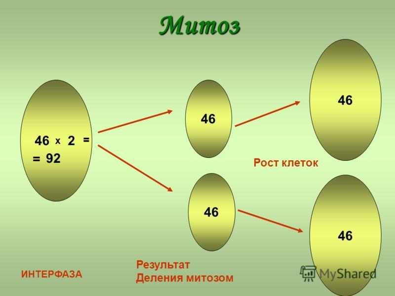 Митоз х 2 = = 92 ИНТЕРФАЗА Результат Деления митозом Рост клеток