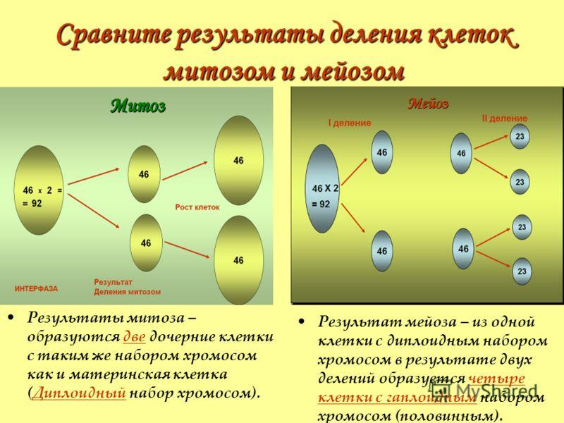 Сравните результаты деления клеток митозом и мейозом Результаты митоза – образуются две дочерние клетки с таким же набором хромосом как и материнская клетка (Диплоидный набор хромосом). Результат мейоза – из одной клетки с диплоидным набором хромосом
