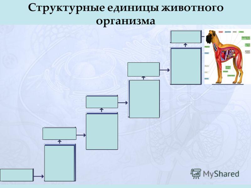 Структурные единицы животного организма