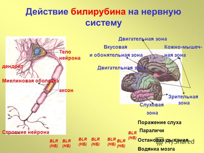 Действие билирубина на нервную систему Миелиновая оболочка аксон Тело нейрона дендрит Строение нейрона Слуховая зона Зрительная зона Кожно-мышеч- ная зона Двигательная зона Вкусовая и обонятельная зона BLR (НБ) BLR (НБ) BLR (НБ) BLR (НБ) BLR (НБ) Пор
