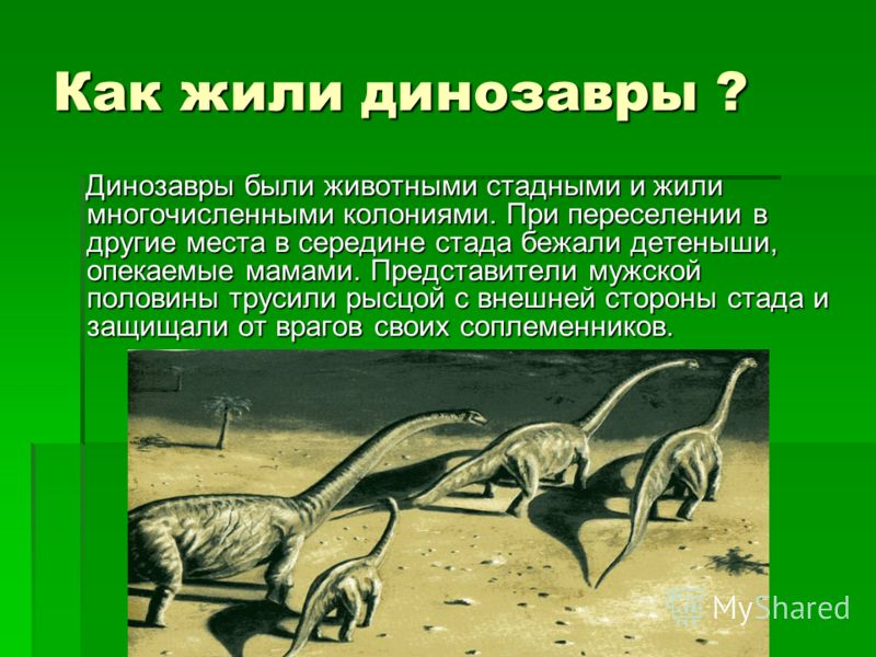 Когда жили динозавры ? Считается, что динозавры жили в мезозойскую эру, которая началась 225 млн. лет назад и закончилась 65 млн. лет назад. Считается, что динозавры жили в мезозойскую эру, которая началась 225 млн. лет назад и закончилась 65 млн. ле