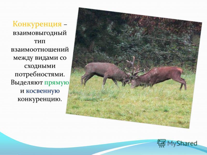Конкуренция – взаимовыгодный тип взаимоотношений между видами со сходными потребностями. Выделяют прямую и косвенную конкуренцию.