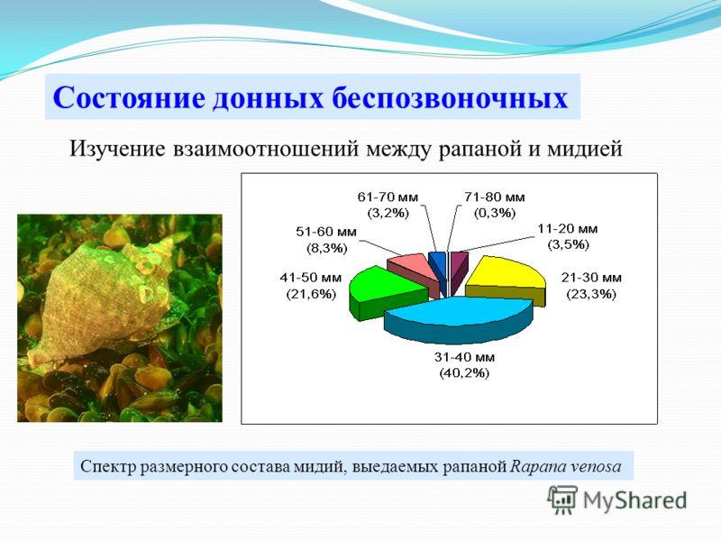 Изучение взаимоотношений между рапаной и мидией Состояние донных беспозвоночных Спектр размерного состава мидий, выедаемых рапаной Rapana venosa