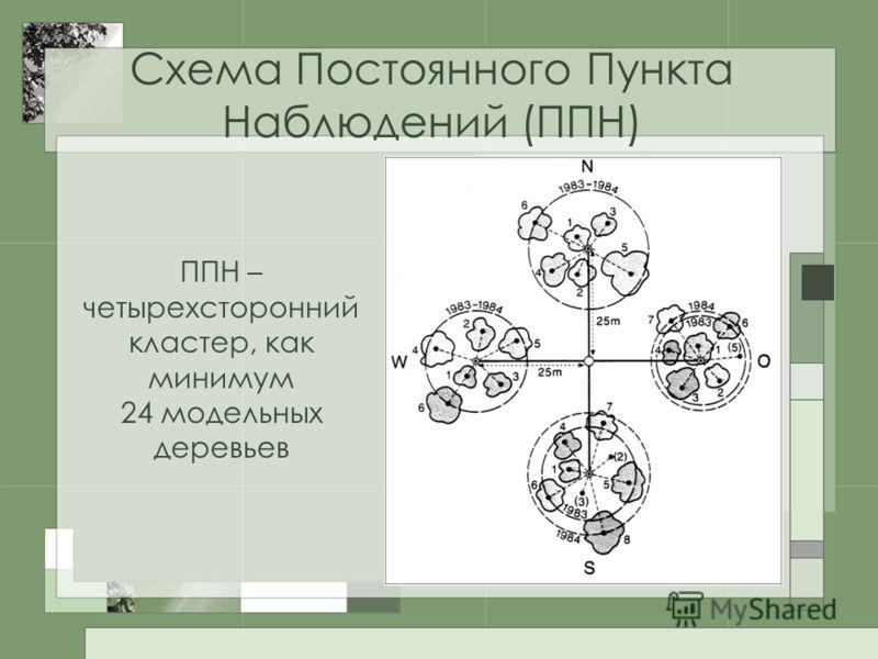 Схема Постоянного Пункта Наблюдений (ППН) ППН – четырехсторонний кластер, как минимум 24 модельных деревьев