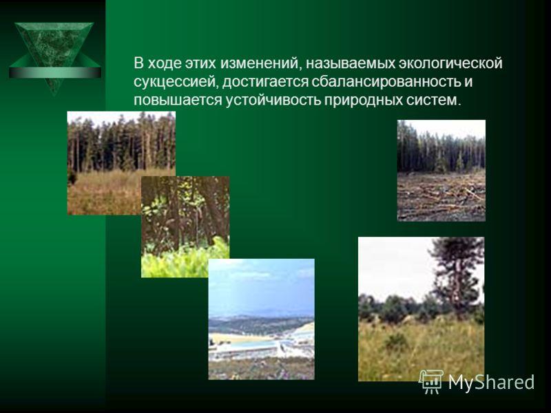 В ходе этих изменений, называемых экологической сукцессией, достигается сбалансированность и повышается устойчивость природных систем.