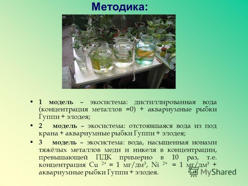 Методика: 1 модель – экосистема: дистиллированная вода (концентрация металлов =0) + аквариумные рыбки Гуппи + элодея; 2 модель – экосистема: отстоявшаяся вода из под крана + аквариумные рыбки Гуппи + элодея; 3 модель – экосистема: вода, насыщенная ио