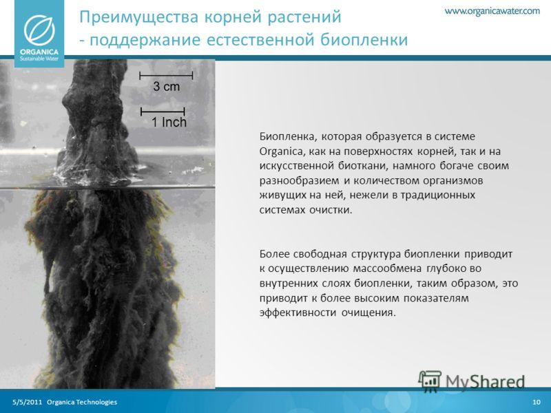5/5/2011 Organica Technologies Преимущества корней растений - поддержание естественной биопленки 10 1 Inch Биопленка, которая образуется в системе Organica, как на поверхностях корней, так и на искусственной биоткани, намного богаче своим разнообрази
