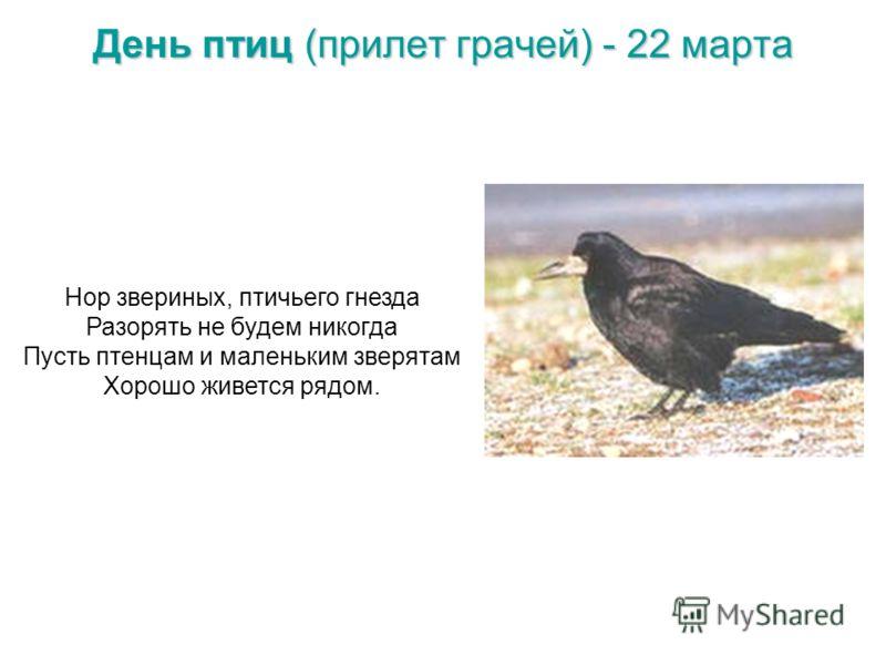День птиц (прилет грачей) - 22 марта Нор звериных, птичьего гнезда Разорять не будем никогда Пусть птенцам и маленьким зверятам Хорошо живется рядом.