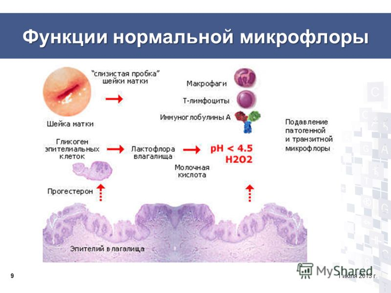 Функции нормальной микрофлоры 91 июля 2013 г.