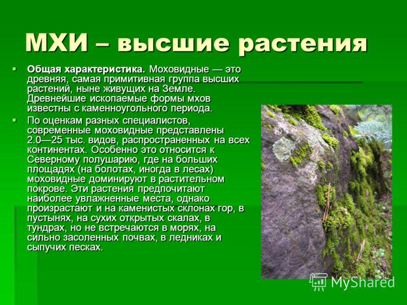 МХИ – высшие растения Общая характеристика. Моховидные это древняя, самая примитивная группа высших растений, ныне живущих на Земле. Древнейшие ископаемые формы мхов известны с каменноугольного периода. Общая характеристика. Моховидные это древняя, с