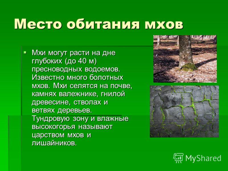 Место обитания мхов Мхи могут расти на дне глубоких (до 40 м) пресноводных водоемов. Известно много болотных мхов. Мхи селятся на почве, камнях валежнике, гнилой древесине, стволах и ветвях деревьев. Тундровую зону и влажные высокогорья называют царс