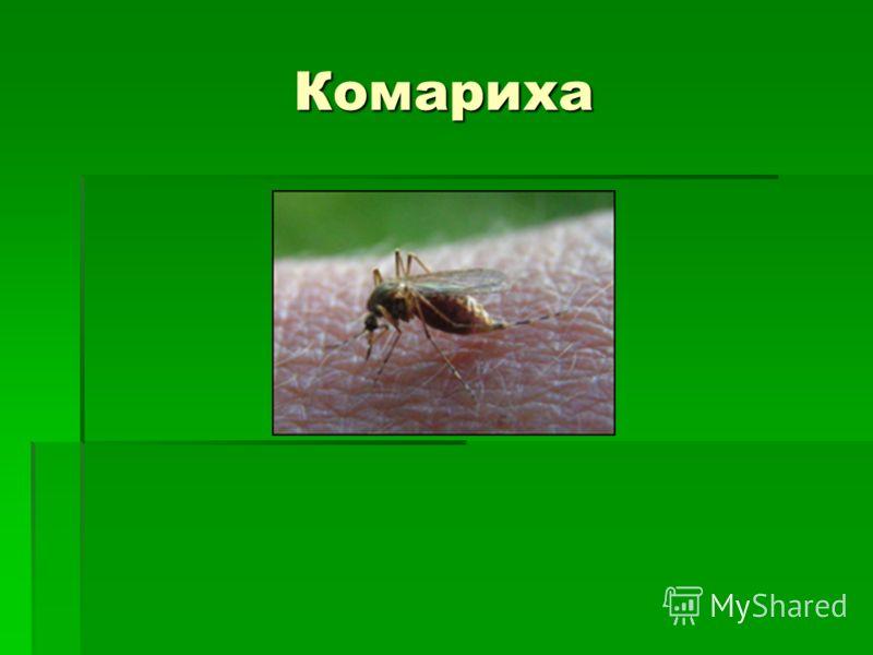 Комариха