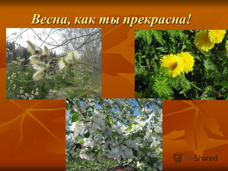 Весна, как ты прекрасна!