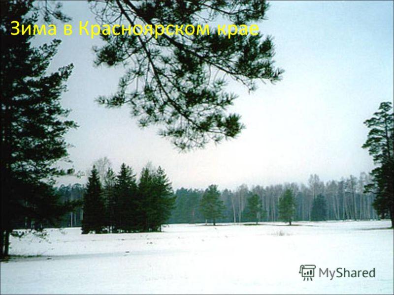 Зима в Красноярском крае