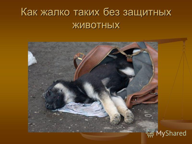 Как жалко таких без защитных животных