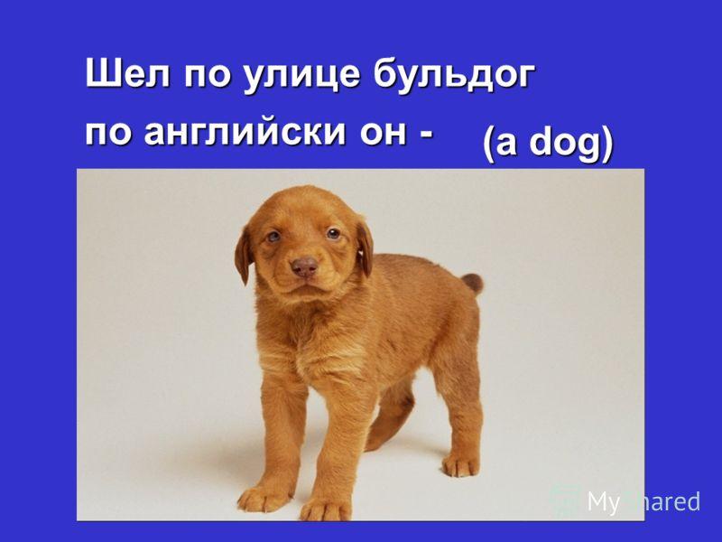 Шел по улице бульдог по английски он - (a dog)