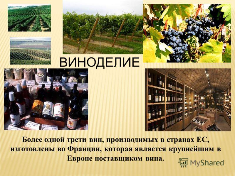 ВИНОДЕЛИЕ Более одной трети вин, производимых в странах ЕС, изготовлены во Франции, которая является крупнейшим в Европе поставщиком вина.