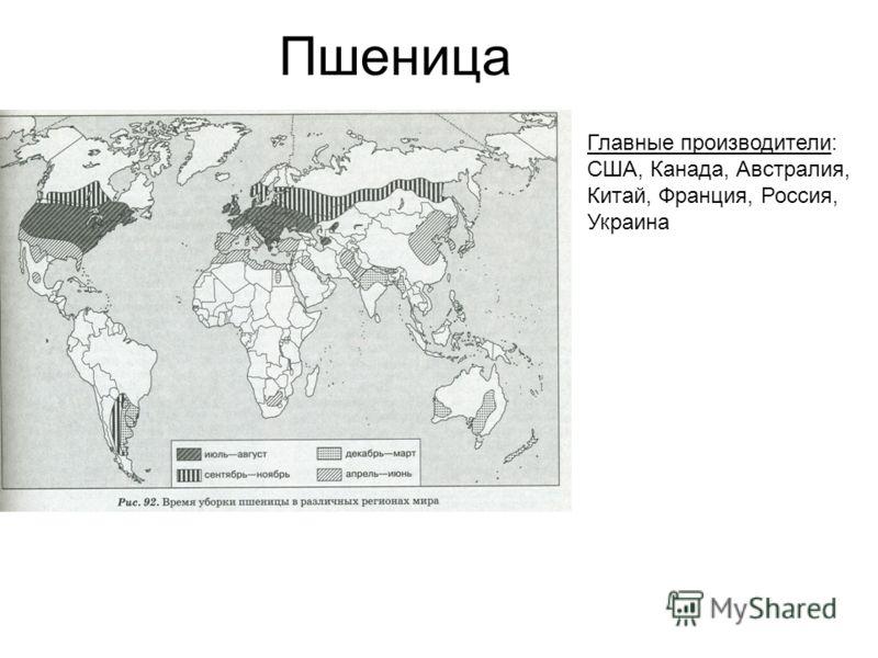 Пшеница Главные производители: США, Канада, Австралия, Китай, Франция, Россия, Украина