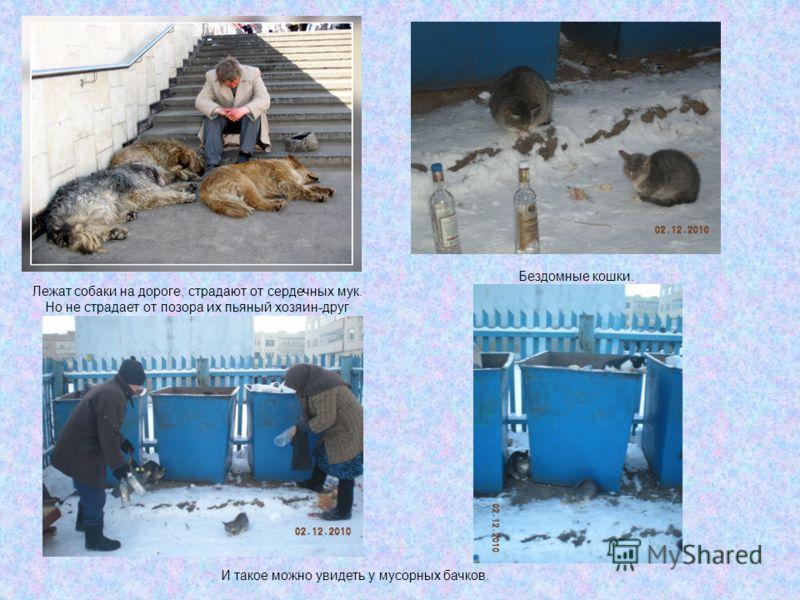 Лежат собаки на дороге, страдают от сердечных мук. Но не страдает от позора их пьяный хозяин-друг Бездомные кошки. И такое можно увидеть у мусорных бачков.