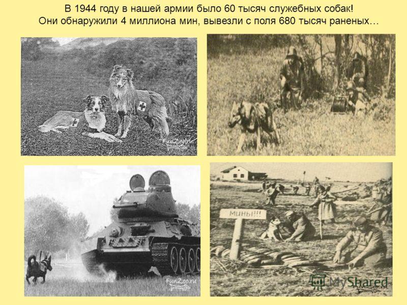 В 1944 году в нашей армии было 60 тысяч служебных собак! Они обнаружили 4 миллиона мин, вывезли с поля 680 тысяч раненых…