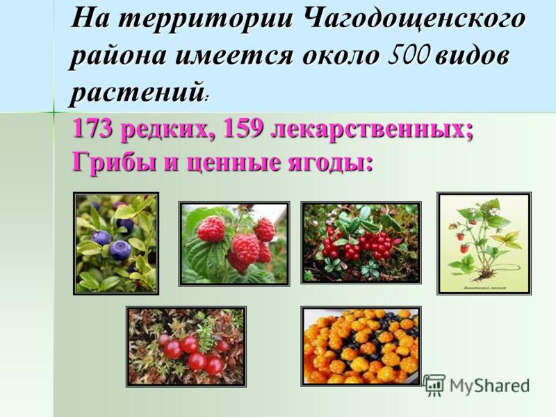 На территории Чагодощенского района имеется около 500 видов растений : 173 редких, 159 лекарственных; Грибы и ценные ягоды: