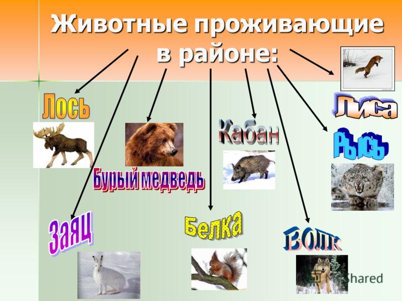 Животные проживающие в районе: