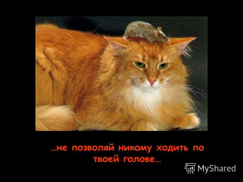 …не позволяй никому загнать тебя в угол…
