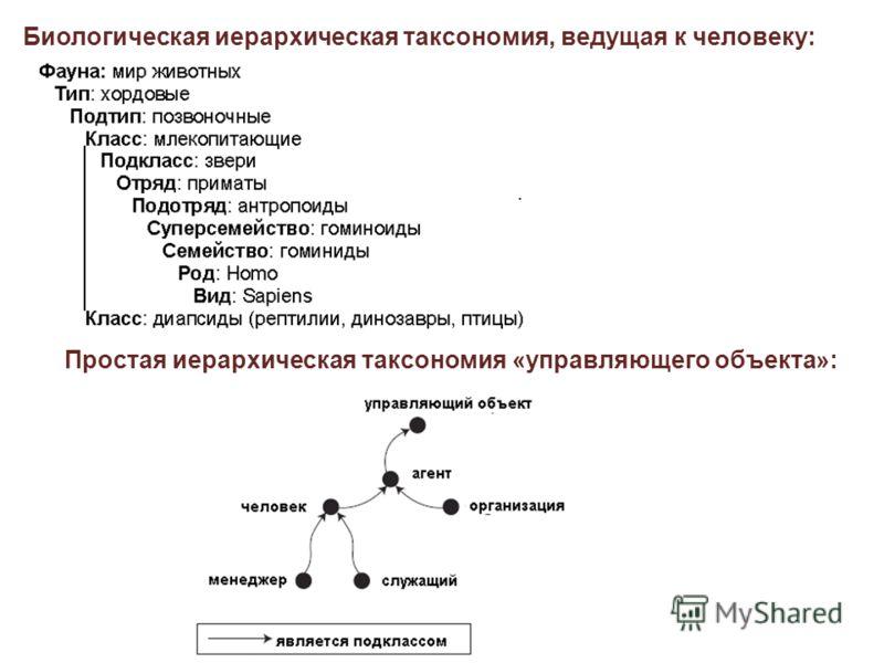 Биологическая иерархическая таксономия, ведущая к человеку: Простая иерархическая таксономия «управляющего объекта»: