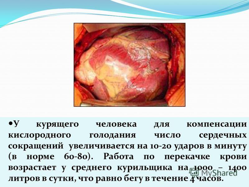 У курящего человека для компенсации кислородного голодания число сердечных сокращений увеличивается на 10-20 ударов в минуту (в норме 60-80). Работа по перекачке крови возрастает у среднего курильщика на 1000 – 1400 литров в сутки, что равно бегу в т