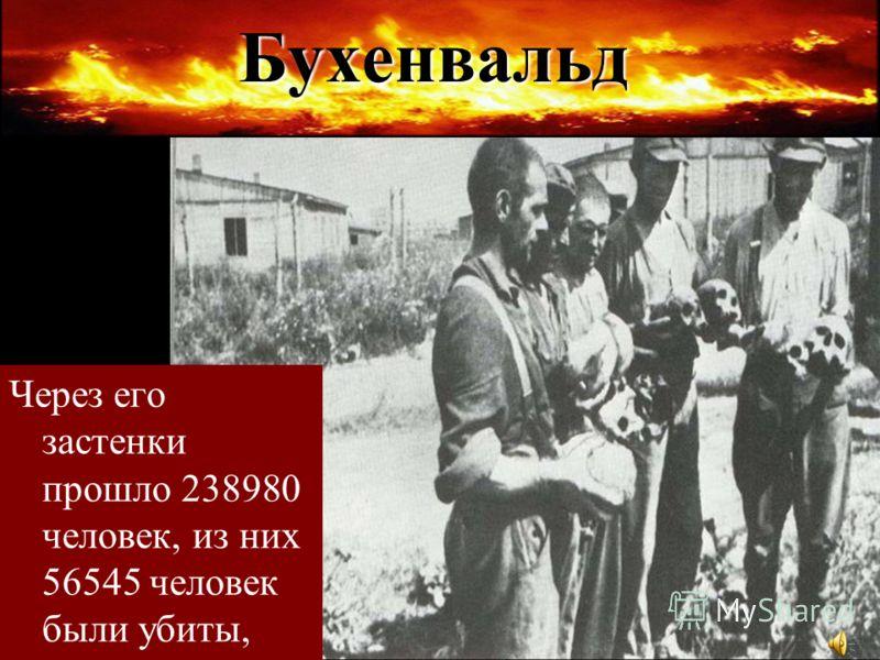 Бухенвальд Через его застенки прошло 238980 человек, из них 56545 человек были убиты,