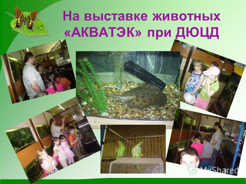 На выставке животных «АКВАТЭК» при ДЮЦД