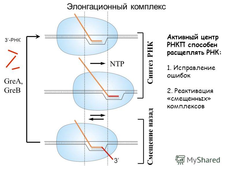 Элонгационный комплекс NTP GreA, GreB Синтез РНК Смещение назад 3 3-РНК Активный центр РНКП способен расщеплять РНК: 1. Исправление ошибок 2. Реактивация «смещенных» комплексов