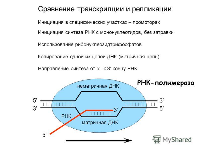 Сравнение транскрипции и репликации Инициация в специфических участках – промоторах Инициация синтеза РНК с мононуклеотидов, без затравки Использование рибонуклеозидтрифосфатов Копирование одной из цепей ДНК (матричная цепь) Направление синтеза от 5-