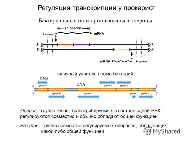 Бактериальные гены организованы в опероны типичный участок генома бактерий Регуляция транскрипции у прокариот Регулон - группа совместно регулируемых оперонов, обладающих какой-либо общей функцией Оперон - группа генов, транскрибируемых в составе одн