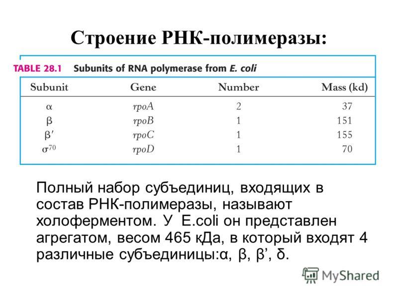 Строение РНК-полимеразы: Полный набор субъединиц, входящих в состав РНК-полимеразы, называют холоферментом. У E.coli он представлен агрегатом, весом 465 кДа, в который входят 4 различные субъединицы:α, β, β, δ.