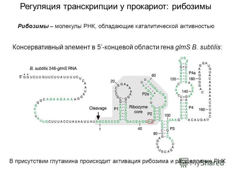 Регуляция транскрипции у прокариот: рибозимы Консервативный элемент в 5-концевой области гена glmS B. subtilis: В присутствии глутамина происходит активация рибозима и расщепление РНК Рибозимы – молекулы РНК, обладающие каталитической активностью