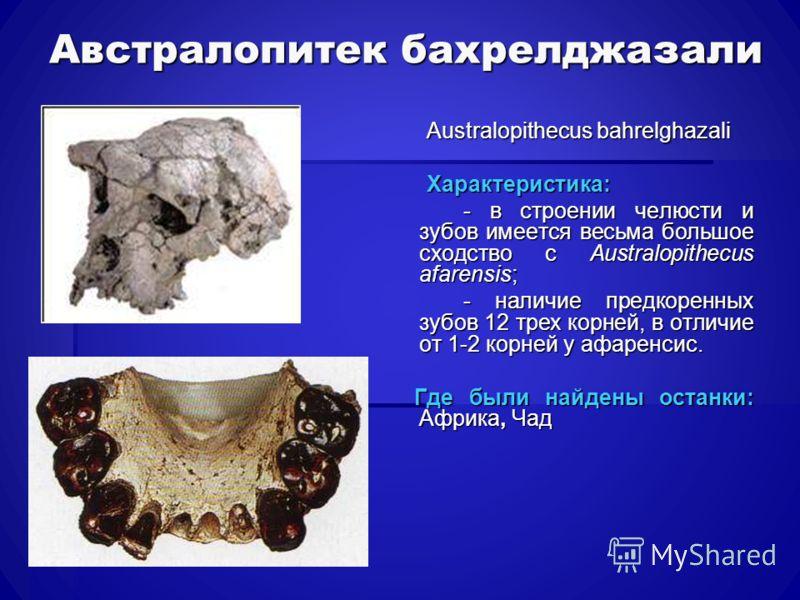 Австралопитек бахрелджазали Australopithecus bahrelghazali Australopithecus bahrelghazali Характеристика: Характеристика: - в строении челюсти и зубов имеется весьма большое сходство с Australopithecus afarensis; - в строении челюсти и зубов имеется