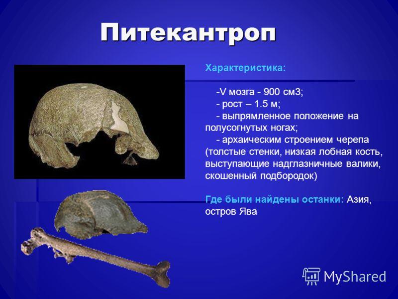 Питекантроп Характеристика: -V мозга - 900 см3; - рост – 1.5 м; - выпрямленное положение на полусогнутых ногах; - архаическим строением черепа (толстые стенки, низкая лобная кость, выступающие надглазничные валики, скошенный подбородок) Где были найд