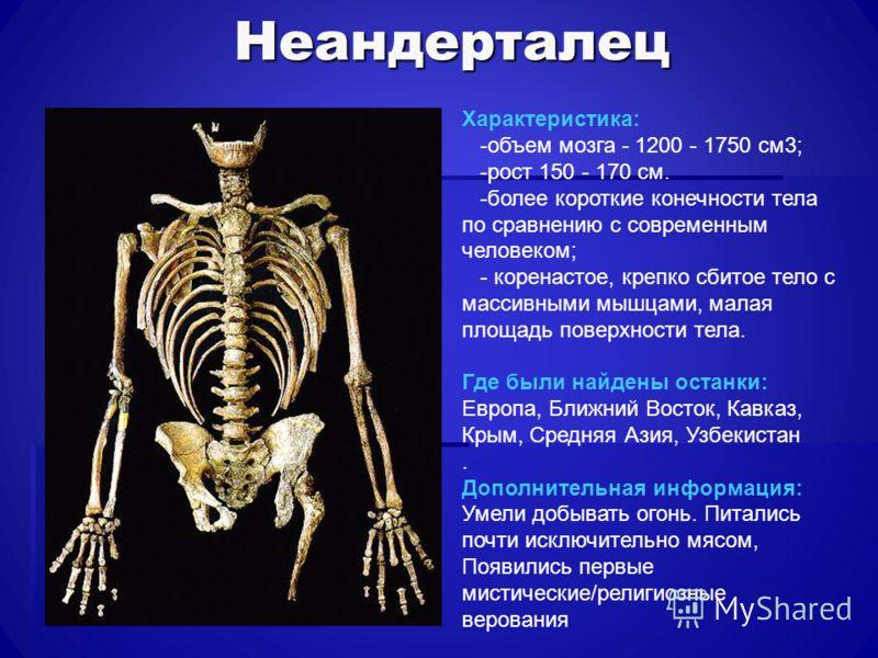 Неандерталец Характеристика: -объем мозга - 1200 - 1750 см3; -рост 150 - 170 см. -более короткие конечности тела по сравнению с современным человеком; - коренастое, крепко сбитое тело с массивными мышцами, малая площадь поверхности тела. Где были най