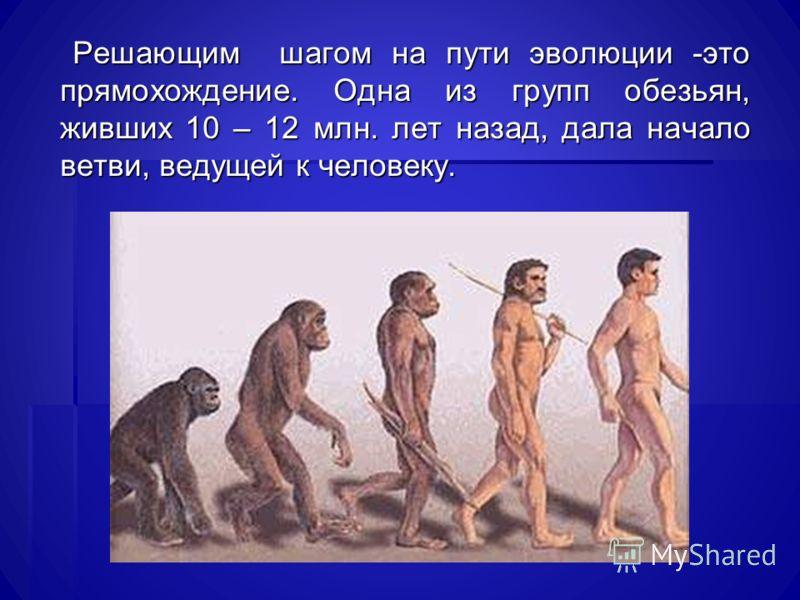 Решающим шагом на пути эволюции -это прямохождение. Одна из групп обезьян, живших 10 – 12 млн. лет назад, дала начало ветви, ведущей к человеку. Решающим шагом на пути эволюции -это прямохождение. Одна из групп обезьян, живших 10 – 12 млн. лет назад,