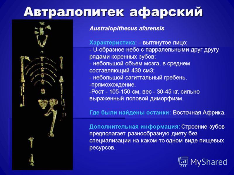 Автралопитек афарский Australopithecus afarensis Характеристика: - вытянутое лицо; - U-образное небо с парралельными друг другу рядами коренных зубов; - небольшой объем мозга, в среднем составляющий 430 см3; - небольшой сагиттальный гребень. -прямохо