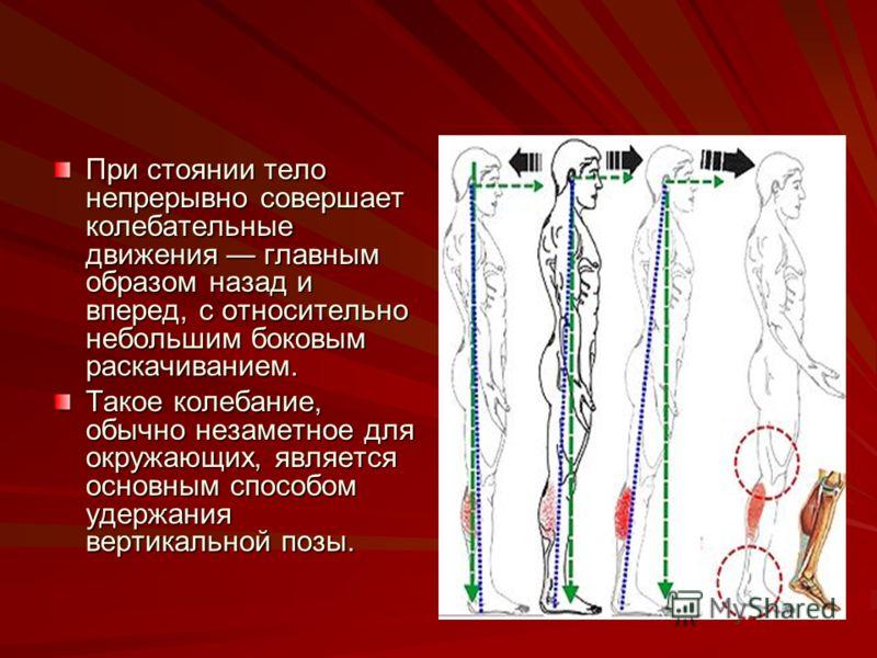 При стоянии тело непрерывно совершает колебательные движения главным образом назад и вперед, с относительно небольшим боковым раскачиванием. Такое колебание, обычно незаметное для окружающих, является основным способом удержания вертикальной позы.