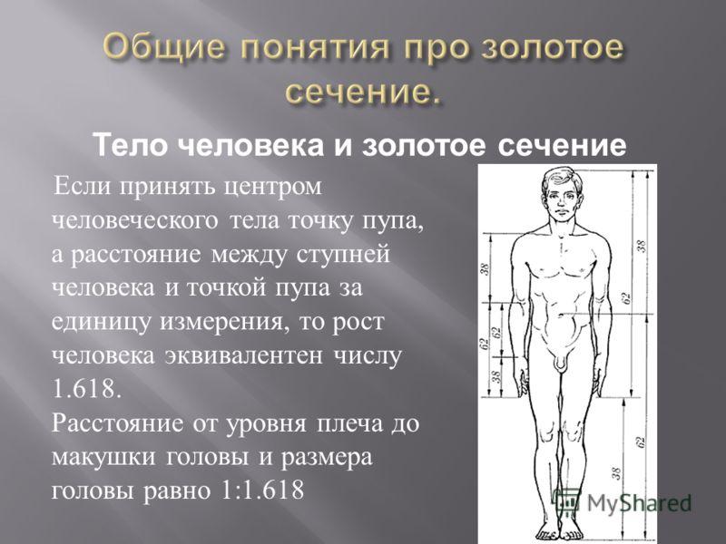 Если принять центром человеческого тела точку пупа, а расстояние между ступней человека и точкой пупа за единицу измерения, то рост человека эквивалентен числу 1.618. Расстояние от уровня плеча до макушки головы и размера головы равно 1:1.618 Тело че