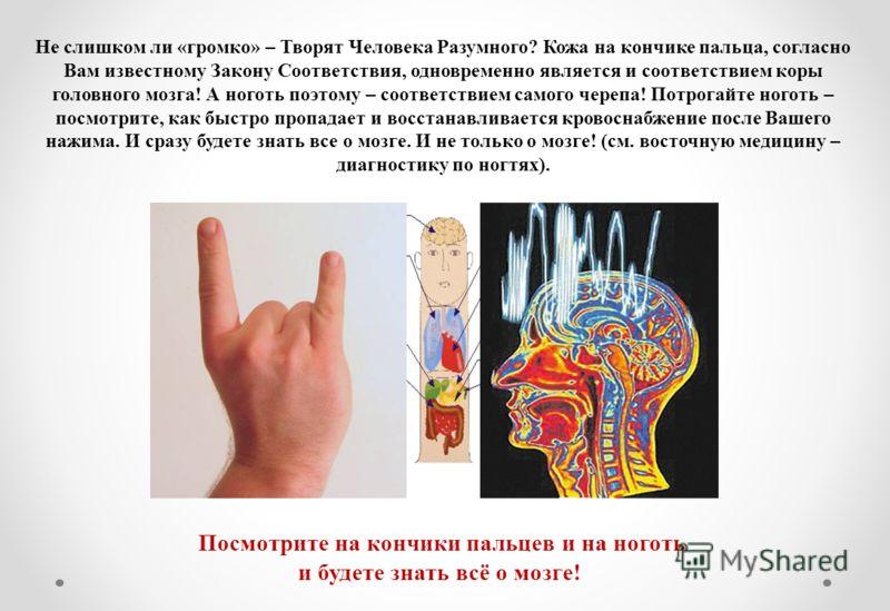 Не слишком ли «громко» – Творят Человека Разумного? Кожа на кончике пальца, согласно Вам известному Закону Соответствия, одновременно является и соответствием коры головного мозга! А ноготь поэтому – соответствием самого черепа! Потрогайте ноготь – п
