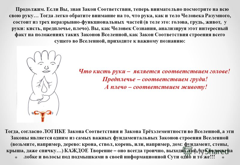 Продолжим. Если Вы, зная Закон Соответствия, теперь внимательно посмотрите на всю свою руку… Тогда легко обратите внимание на то, что рука, как и тело Человека Разумного, состоит из трех неразрывно-функциональных частей (в теле это: голова, грудь, жи