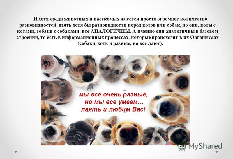 И хотя среди животных и насекомых имеется просто огромное количество разновидностей, взять хотя бы разновидности пород котов или собак, но они, коты с котами, собаки с собаками, все АНАЛОГИЧНЫ. А именно они аналогичны в базовом строении, то есть в ин