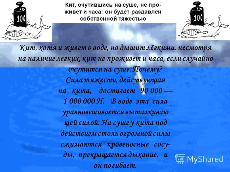 Кит, очутившись на суше, не про- живет и часа: он будет раздавлен собственной тяжестью Кит, хотя и живет в воде, но дышит лёгкими. несмотря на наличие легких, кит не проживет и часа, если случайно очутится на суше. Почему? Сила тяжести, действующая н