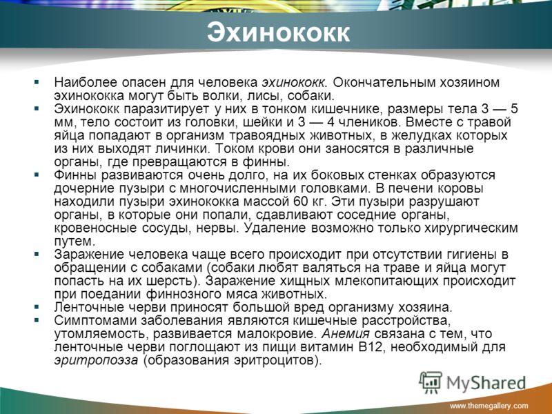 Эхинококк Наиболее опасен для человека эхинококк. Окончательным хозяином эхинококка могут быть волки, лисы, собаки. Эхинококк паразитирует у них в тонком кишечнике, размеры тела 3 5 мм, тело состоит из головки, шейки и 3 4 члеников. Вместе с травой я