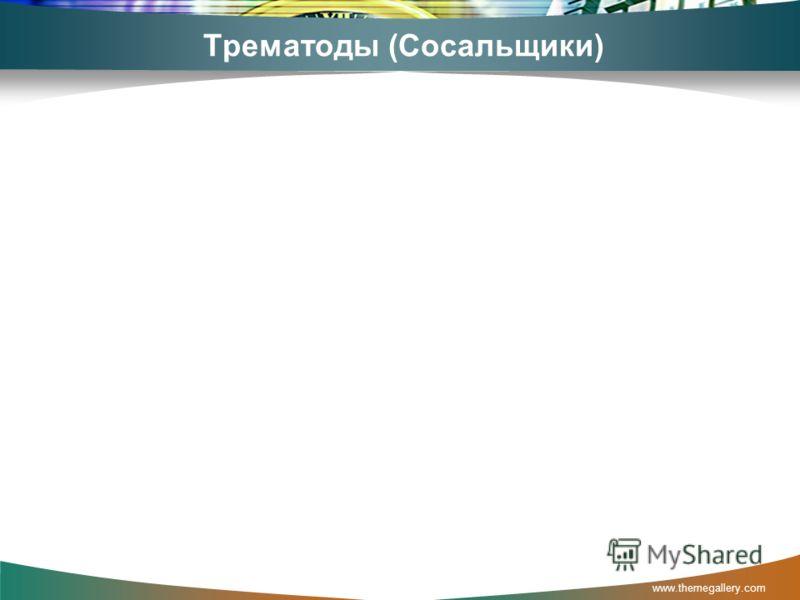 Трематоды (Сосальщики) www.themegallery.com